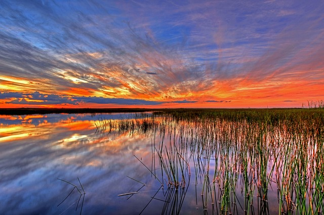 Florida Attractions Everglades